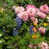 個人の御宅の花壇