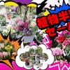 年末植物半額セール!!(*^▽^*)