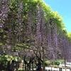 🌹 お花たちのベストシーズン