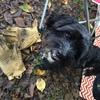 犬の防寒冬服「L.L.Bean フィールド・コート・フォー・ドッグ」で冬のお散歩も快適に!