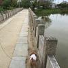 アヤメが綺麗な万代池公園!