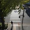 ソール・ライター風「山下公園通りの銀杏並木」