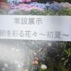 チューリップ四季彩館、初夏のお花さん・・その2