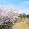 バイクはなしで高山航空公園の桜とクロスランナーのカスタマイズ