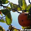 柿の収穫@MyGarden