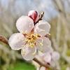 春分の日に、梅の名所「洞慶院」へ片道7キロの健脚道中