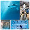 『長崎ペンギン水族館~ペンギンが長崎に来て60年記念~』