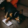 ドコモオンラインストアでiPhone XS MAXを購入!機種変更(iTunesでのデータ移行)の手順まとめ