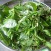春の山菜:タラの芽とアズキナ【熟女の日常】
