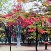 国指定文化財庭園・香雪園(こうせつえん)の紅葉|2019年秋|北海道函館市