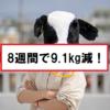 【ダイエット】8週間で体重を9.1kg減らすまでの過程。
