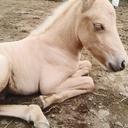 道産子(北海道和種馬)飼育日記