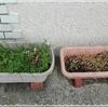 ずぼらな花壇にも春が来た