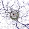 地面まで桜で埋め尽くされてます #360pic