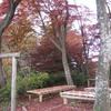 勝俣部長の健康体質作り・・・・高尾山「健康を体感する」(60)