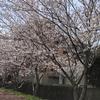 桜巡り 〜 ファームパーク伊都 〜