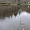 やっと両グルテンの釣りも数が釣れる様になって来ましたよ。(2121富沢の池4)