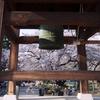 NO.4山高神代桜