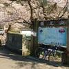 鎌北湖の桜と阿諏訪地区の桜 花見は人が少ない方が好き!