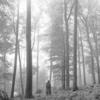 4連休はテイラー・スウィフト folklore を聴きながら過ごした