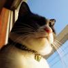 今日の黒猫モモ&白黒猫ナナの動画ー867