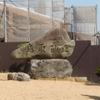 【鳥取県】鳥取砂丘へ行ってきた ~砂丘って綺麗~