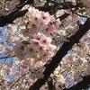 2019春お花見🌸