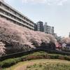 東京の桜の名所といったらココ!「目黒川の桜並木」