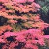 大阪で紅葉狩りが楽しめる。秋の万博記念公園おすすめ6つのスポット