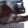 今日の黒猫モモ&白黒猫ナナの動画ー767