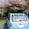 桜の終わり。。。 (ρ_-)o