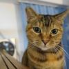 10月前半の #ねこ #cat #猫 どらやきちゃん 補足