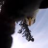 【動画有】鷲にGoPro(ゴープロ)を盗まれた瞬間を目撃したぞっ!