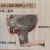 身体の使い方Seriesその93『頭を前に出さない』摂食嚥下、誤嚥にも関わる舌骨をテーマに姿勢を考えます。姿勢の気になる方にはオススメです‼︎