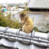【広島、尾道】『妙宣寺』に行ってきました。国内旅行 国内観光 女子旅 主婦ブログ