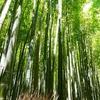 京都出身者による『京言葉』の微妙な解釈ご紹介します。