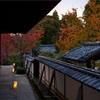 京都・東山 - 紅葉進む 泉涌寺雲龍院