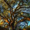 【ヒューマンデザイン】樫の木の堅さか、柳の枝の柔軟性か