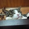 猫ジャンプ&キノコはメイン?&小説更新♪