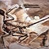 """恐竜も""""フケ""""で悩まされていた!?1250万年前のラプトルの化石から発見される"""