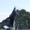 紀伊半島横断旅行記(3)太地町で鯨巡り
