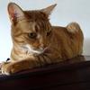 猫が仏壇の上にあがって困る