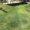芝生がみどり〜