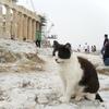 世界一周ピースボート旅行記 31日目~ギリシャ(ピレウス)1日目~③「パルテノン神殿」