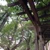 木漏れ日が歩道の濃淡としてゆれて現れるさまを眺めるのが好きだ |多摩川台公園古墳でゆったりとした時間を過ごした