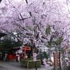 【水火天満宮】しだれ桜に染まる極上の春!六玉稲荷で就職の縁結びも!