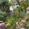 あじさいとネコネコ先生祭りの庭