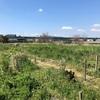 世間でイメージされる農業やって田舎でスローライフってやつ。