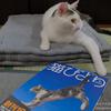 【お知らせ】「猫びより2018年7月号」に写真が掲載されました