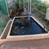 庭に池をつくる(⑬仕上げ)